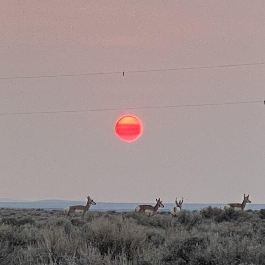 Antelope at Sunset Wyoming
